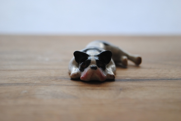 French Bulldog Miniature