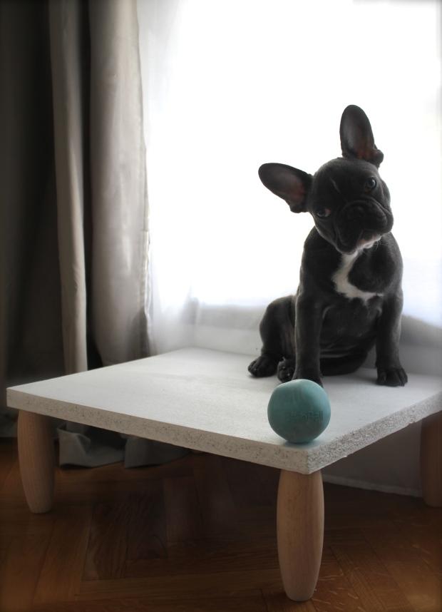 Lafayette on dog step stool