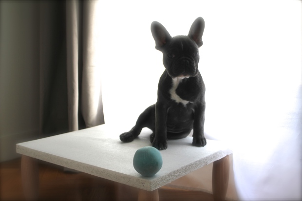 French Bulldog on dog step